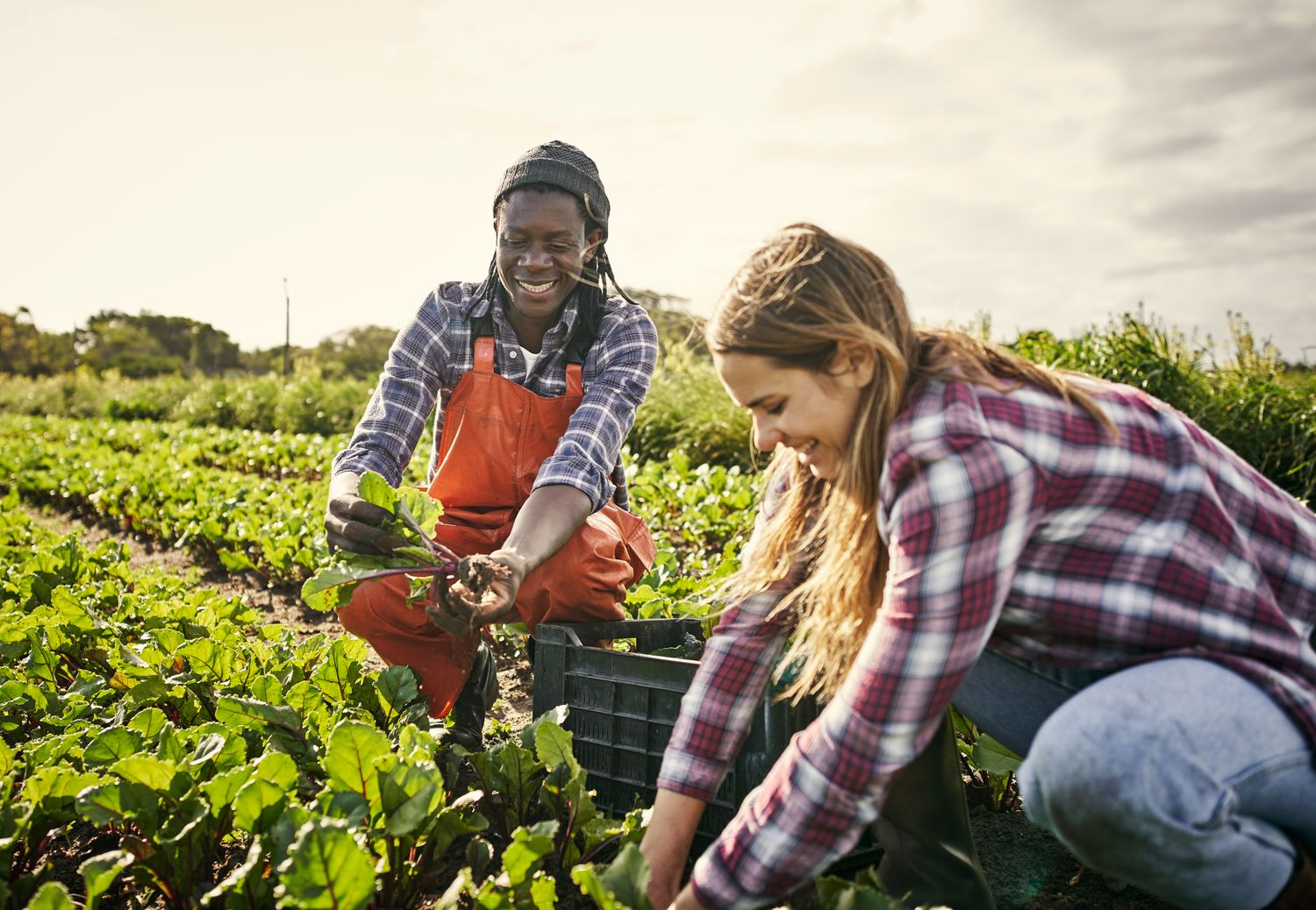 South African agribusiness